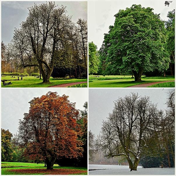 4 Jahreszeiten in Schlossgarten von Oldenburg