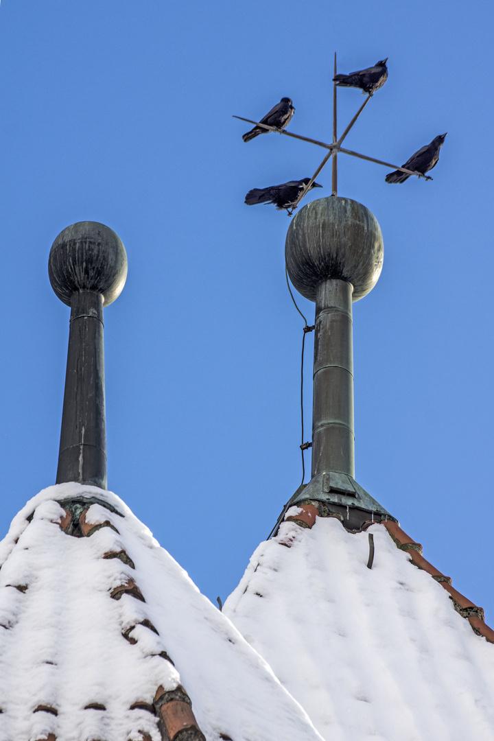 4 Krähen im Winter