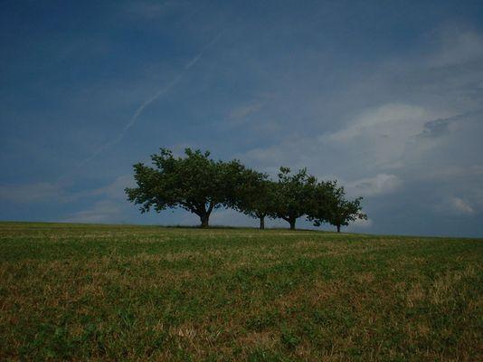 4 trees
