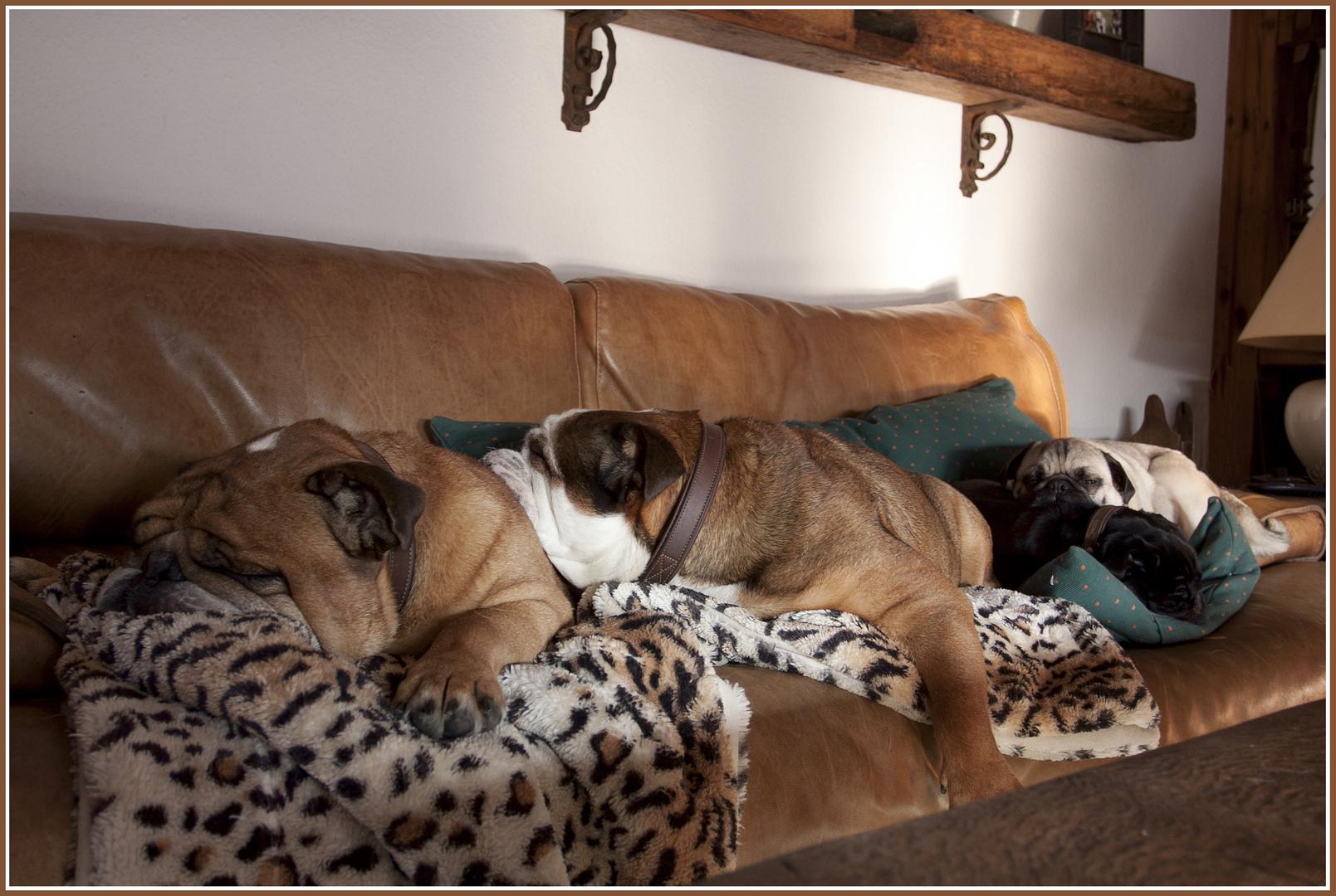 chillen auf dem sofa hausidee. Black Bedroom Furniture Sets. Home Design Ideas