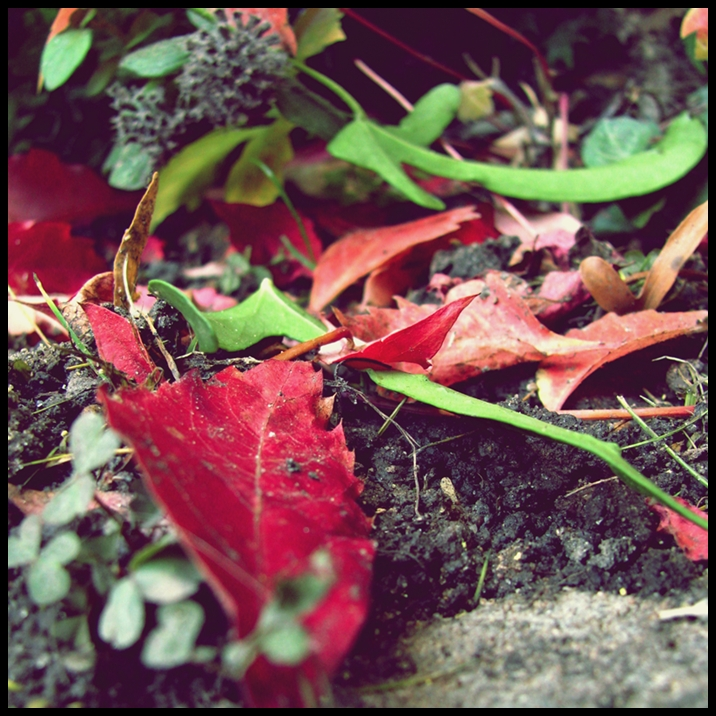 41. Herbstbeginn