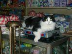4,15 kg Katze