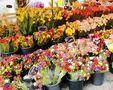 Fiori multicolori di chantal Montmasson in Ghiroldi