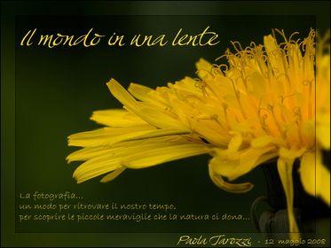 67a - Paola Tarozzi