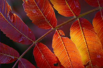 11/04 Herbst