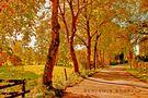 Spirit of trees von Benjamin ANDRE