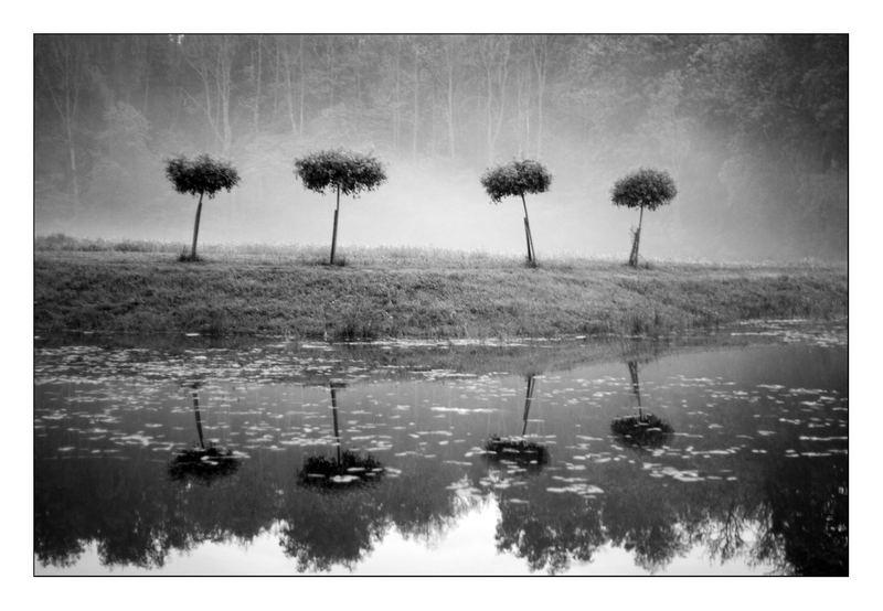 4trees