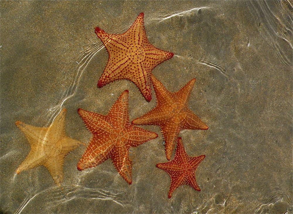 """""""5 Estrellas"""""""