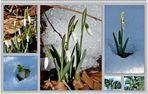 5. März - der Wetterbericht...