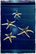 5 Sterne - 5 Zacken