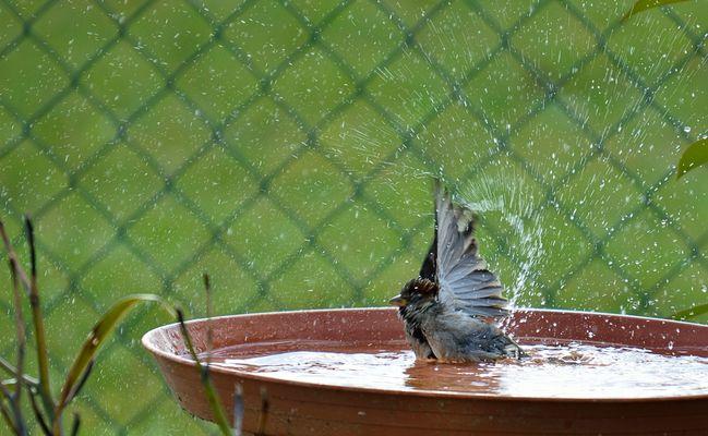 50 cm papillon