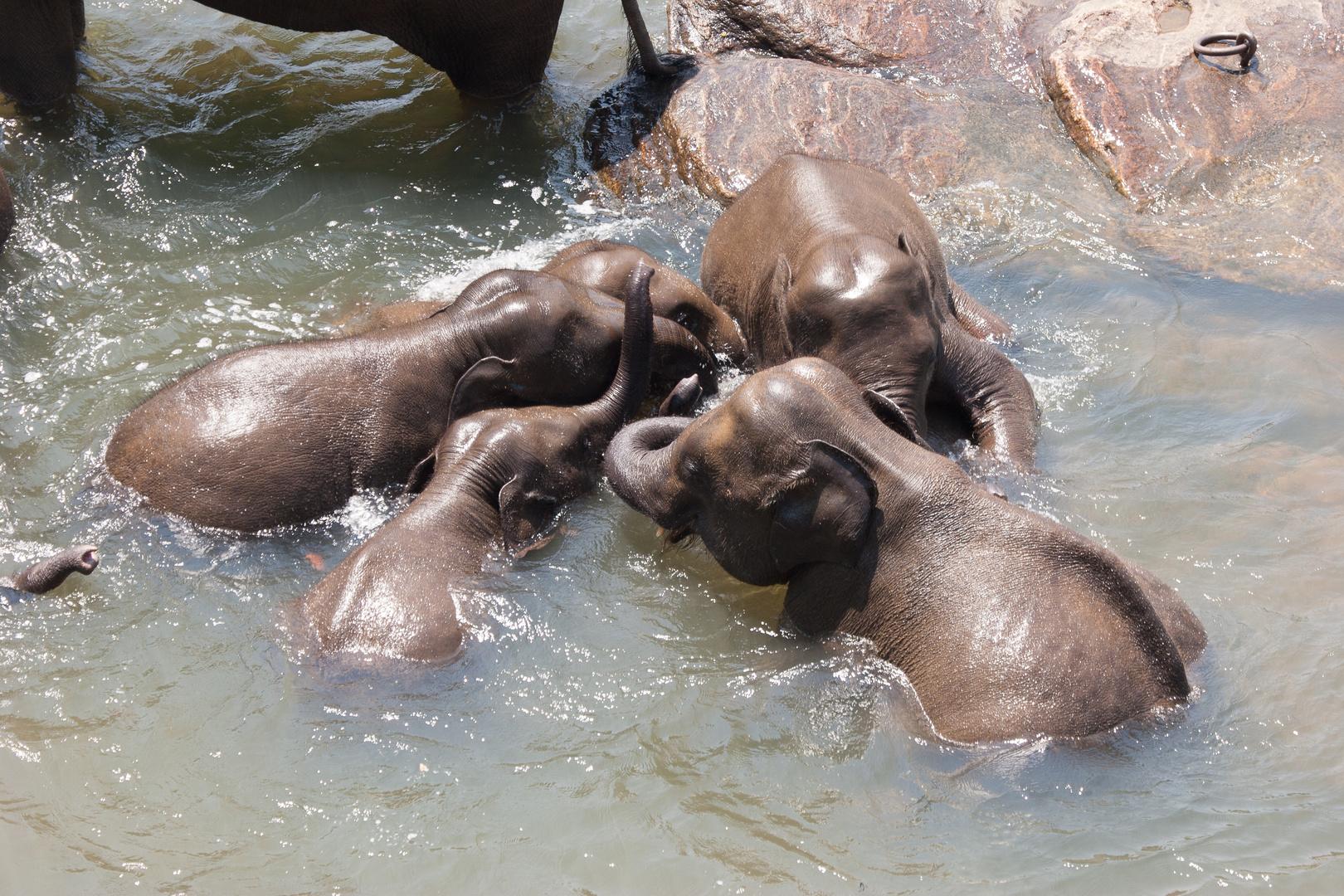 54 - Elefanten: Ringelpietz mit Anfassen im Elefantenwaisenhaus
