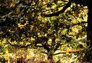 Herbstsymphonie im Hain by SINA