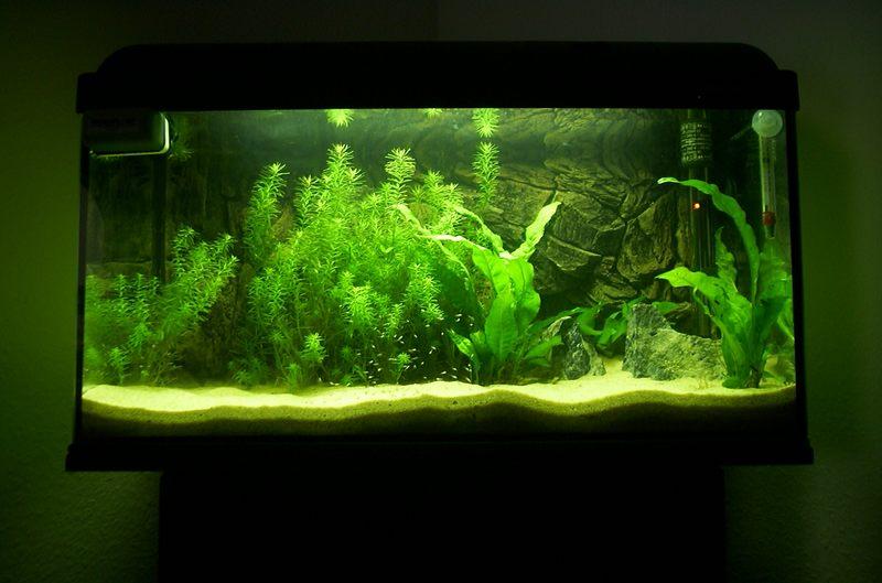 54l aquarium foto bild tiere haustiere aquaristik bilder auf fotocommunity. Black Bedroom Furniture Sets. Home Design Ideas