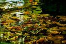 Wasser und gefallene Herbstblätter.... von SINA