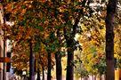 Habt einen schönen Herbsttag die Sonne wird ihn versüssen by SINA