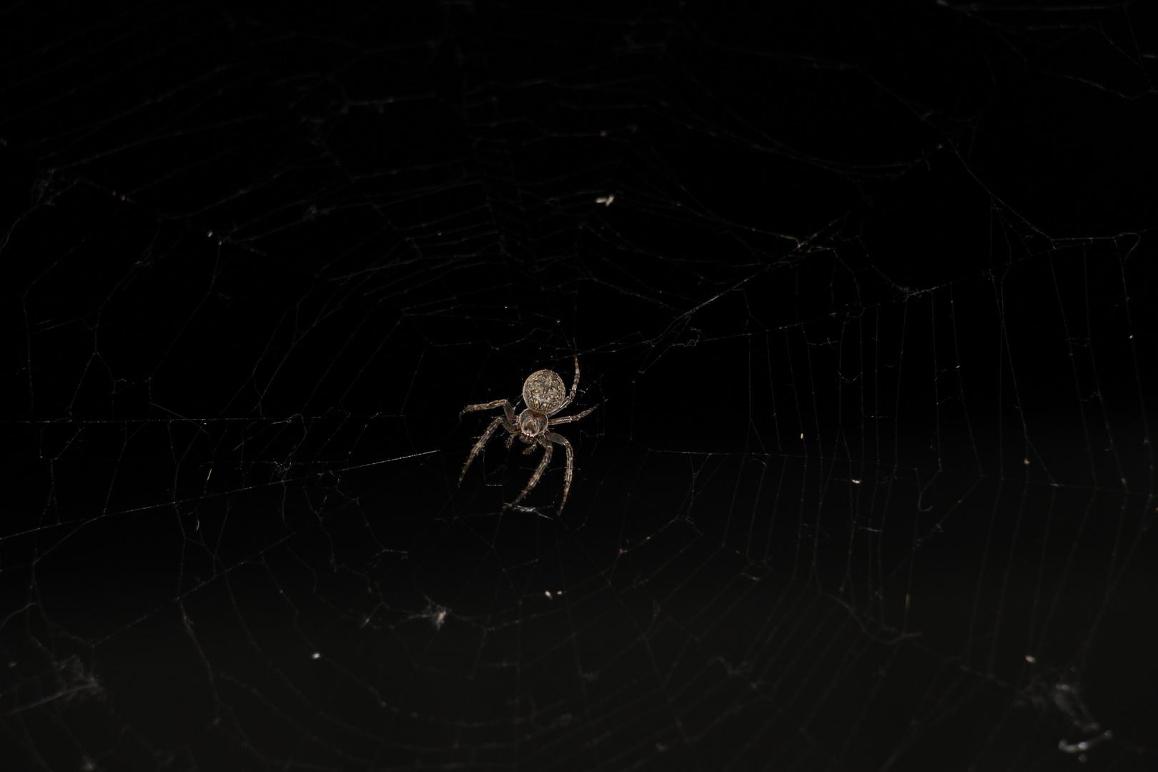 6 beinige-Spinne…. am Freitag den 13ten (Teil2)