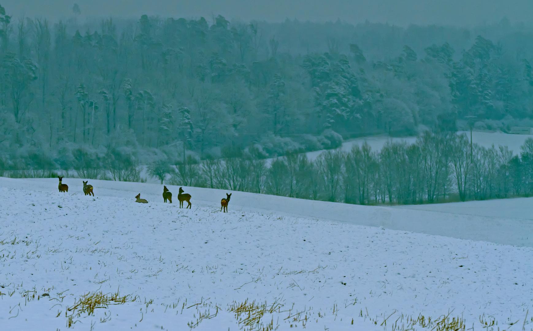 6 im Schnee