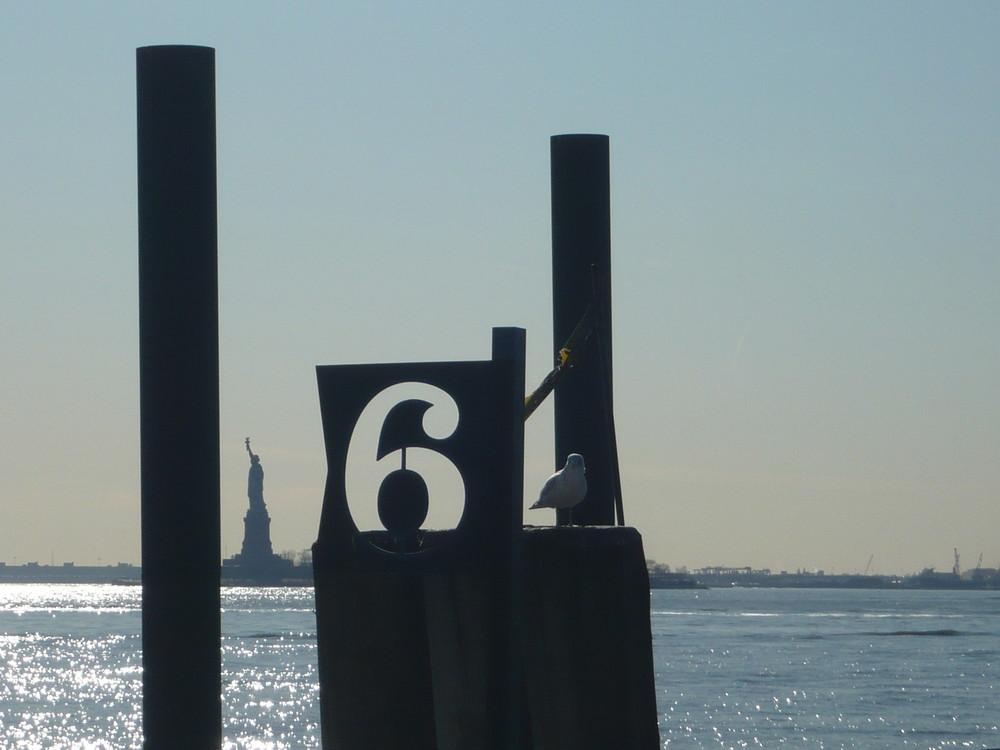 6 liberty gulls