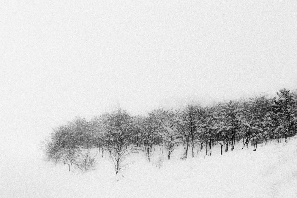 Lost in the snow by Masoud Shokrnia