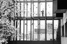 Vogelschwarm by Rüdiger Widera