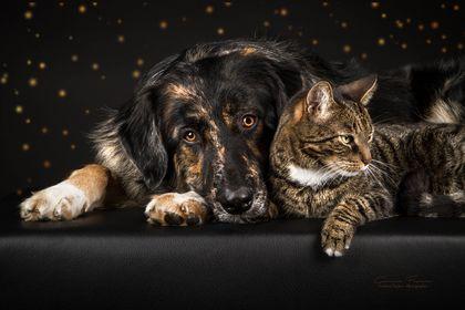 03 - Katz und Hund