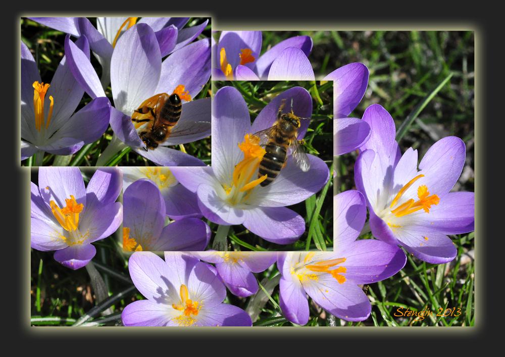 68-13 Frühlingsgetümmel
