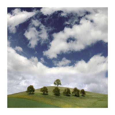 7 Bäume & 1 Vogel