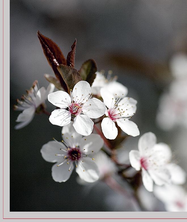 7 marzo : primavera anticipata