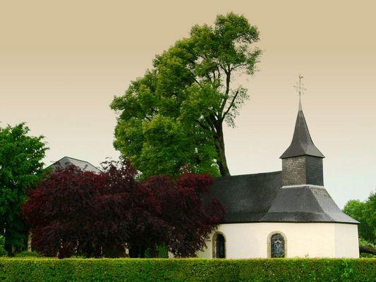 700 Jährige Linde (Clemency, Kéinzig, Küntzig)