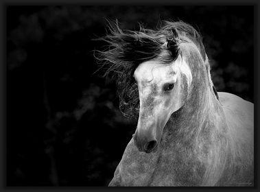 Pferde, Esel, Maultiere