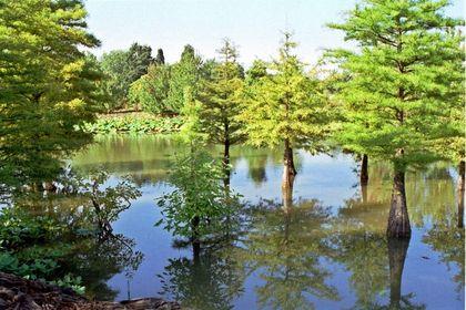Arboretum Ellerhop