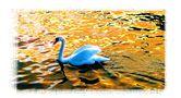 Swan lake von JeanPierre