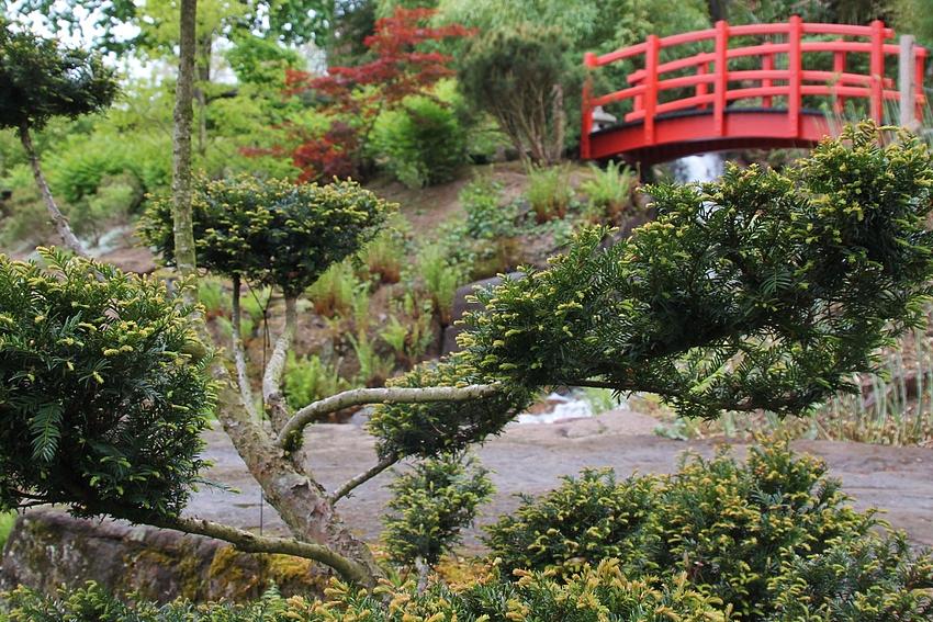 8 - Japanischer Garten