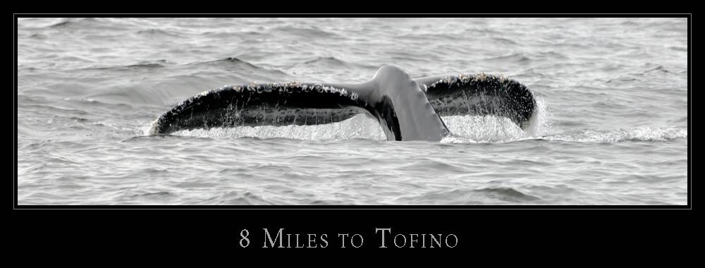 8 Miles to Tofino
