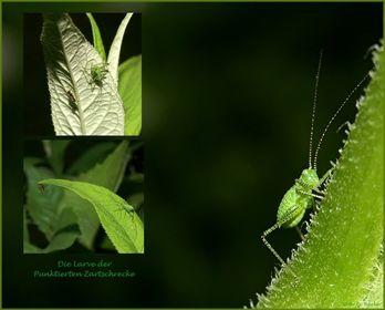 sonstige Insektenlarven