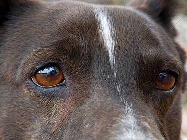 Detailfotos Hundeaugen
