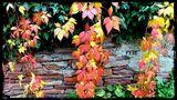 Herbstlaub von Peter Berns