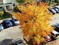 Herbst im Wohngebiet von Jonny07