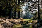 9 o'clock in the Black Forest von Andi Heinze
