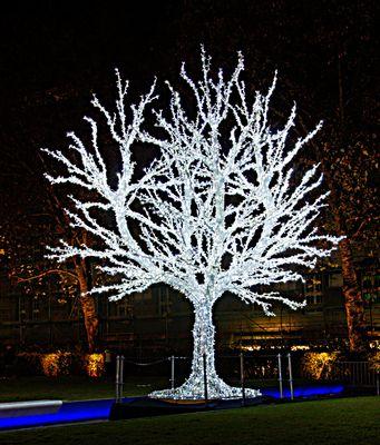 9355a Baum