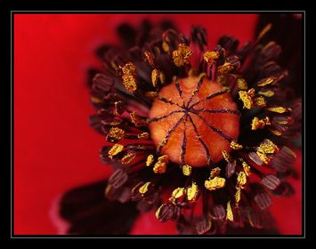 Monatsprojekt: Blütenstempel