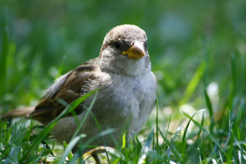 A bird in central park
