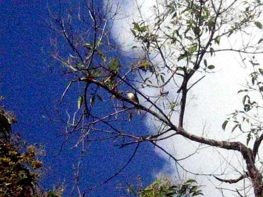 a bird in the tree