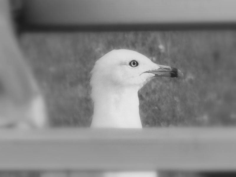 A bird thru the bench...