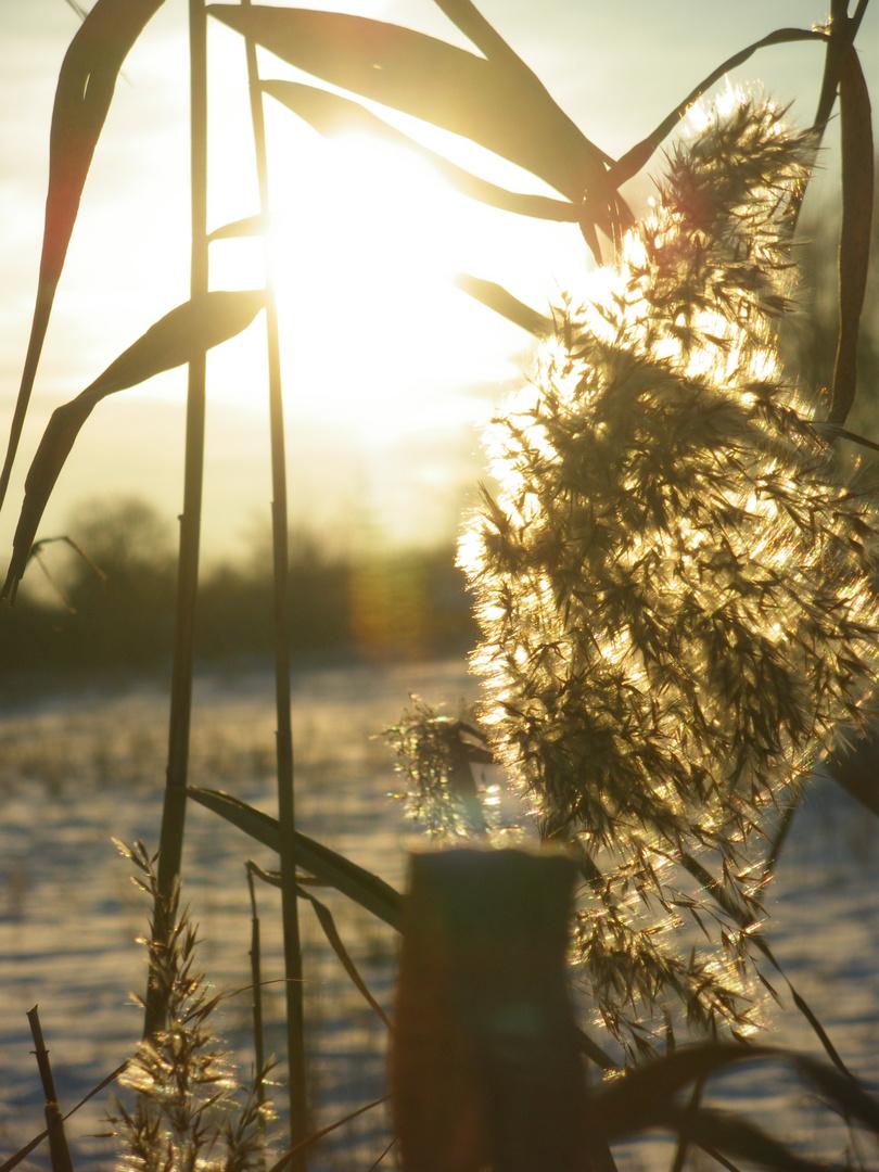 A bit sun in the cold