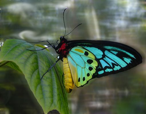 A butterfly in Costa-Rica