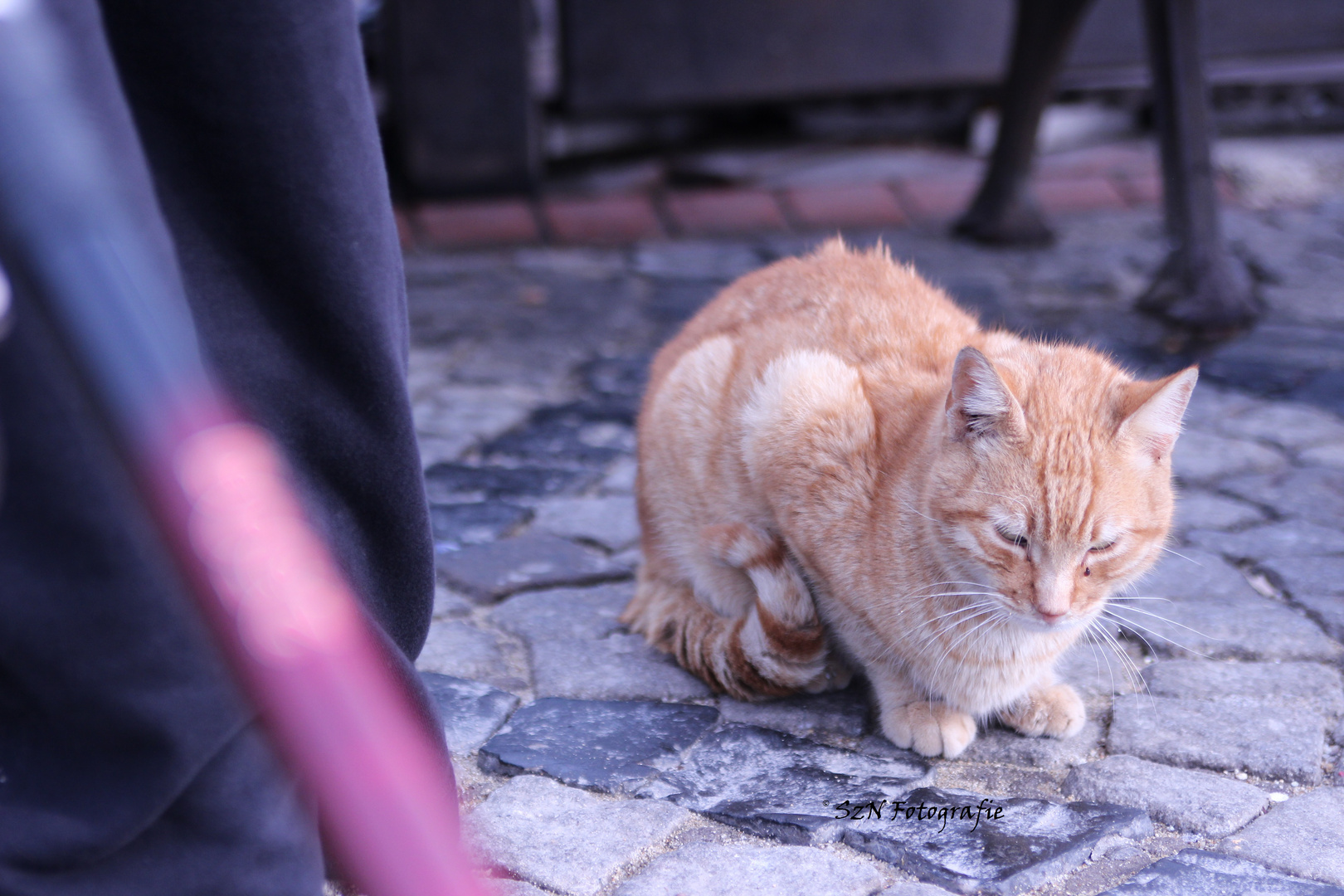 a cat in istanBooL
