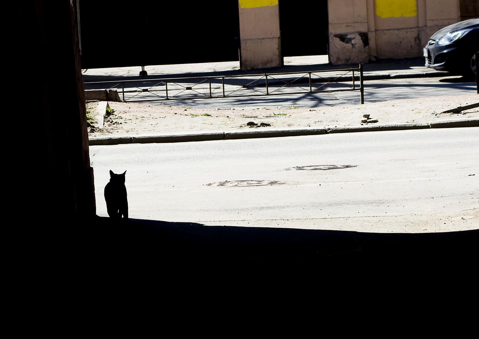 A cat. Vasilevsky Island.