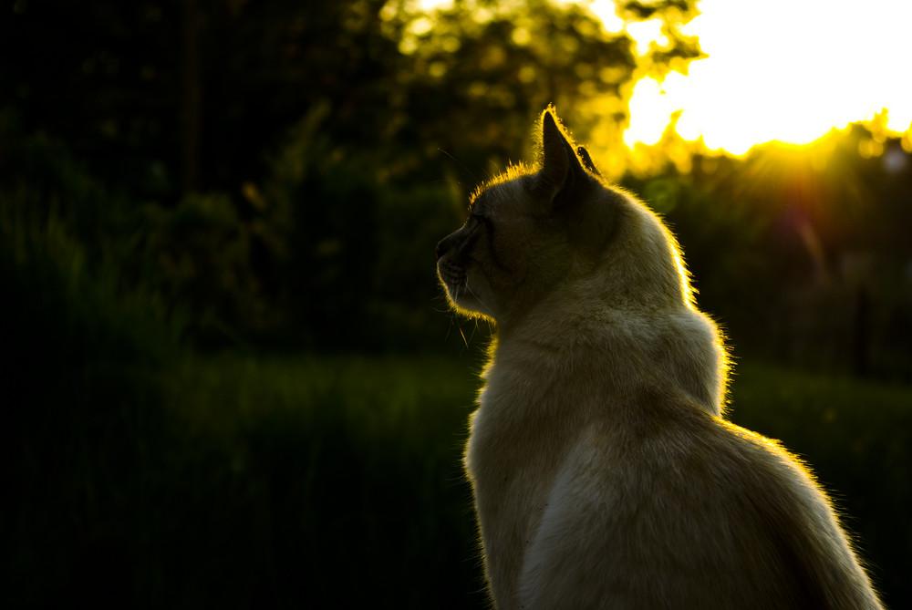 A chat au soleil